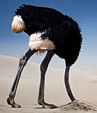 ostrich-head-in-sand-2.jpg