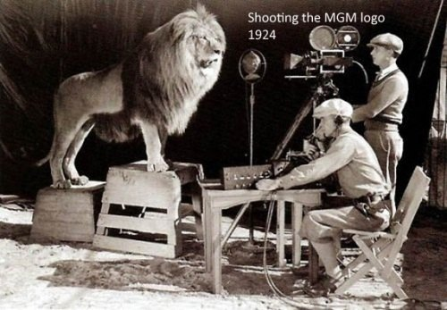 MGM Lion Being Shot